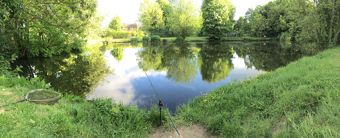 Summer evening carpy goodness!